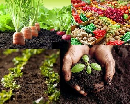 abono - Abono Organico